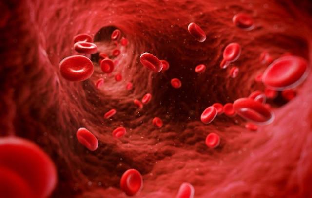 Что значат понижены эритроциты в крови взрослого (причины у женщин). Эритроциты понижены, что это значит