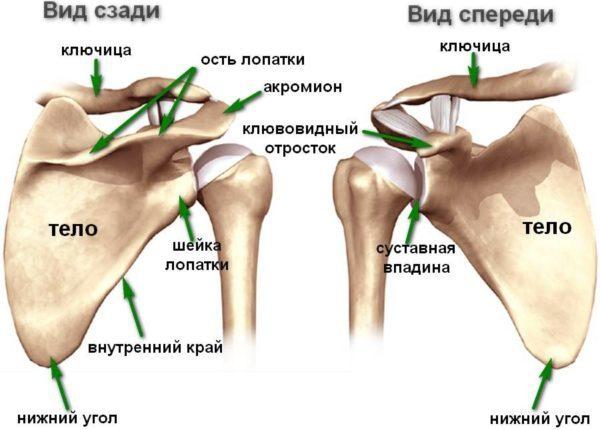 Боль под правой лопаткой сзади со спины (колющая, резкая, тупая): причины и лечение