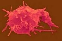 Пониженные тромбоциты в крови: что это значит. Симптомы, причины, что делать, если тромбоциты понижены ( отзывы)