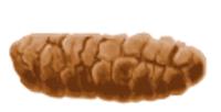 Виды кала. Бристольская шкала формы кала