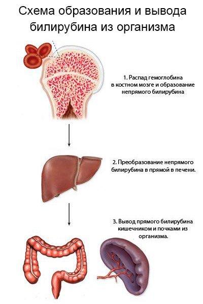 Повышенный билирубин. Часть 3: Заболевания, при которых повышен прямой билирубин