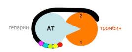 Антитромбин III (определение уровня в плазме крови)