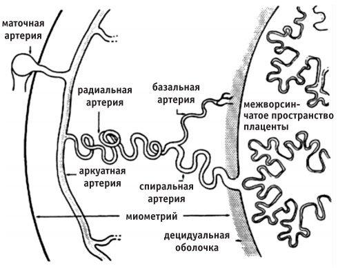 Гемодинамические нарушения 1 а степени при беременности