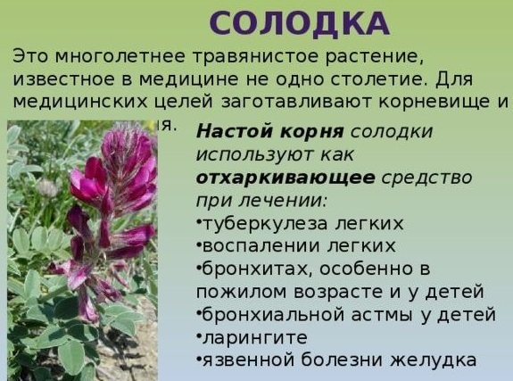 Линкас сироп от кашля: инструкция по применению