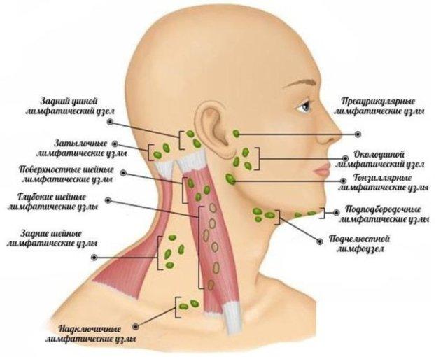 Лимфаденит шейный у детей и взрослых - причины, лечение