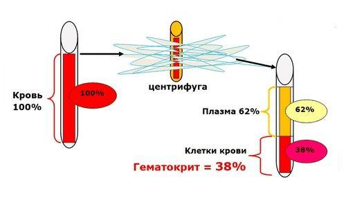 Гематокрит ниже нормы: что это значит и что делать?