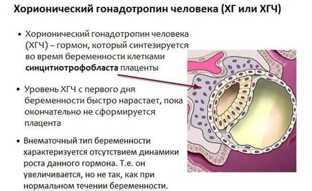 Анализ крови на беременность, анализ крови на ХГЧ. Определение беременности. Сдать ХГЧ.