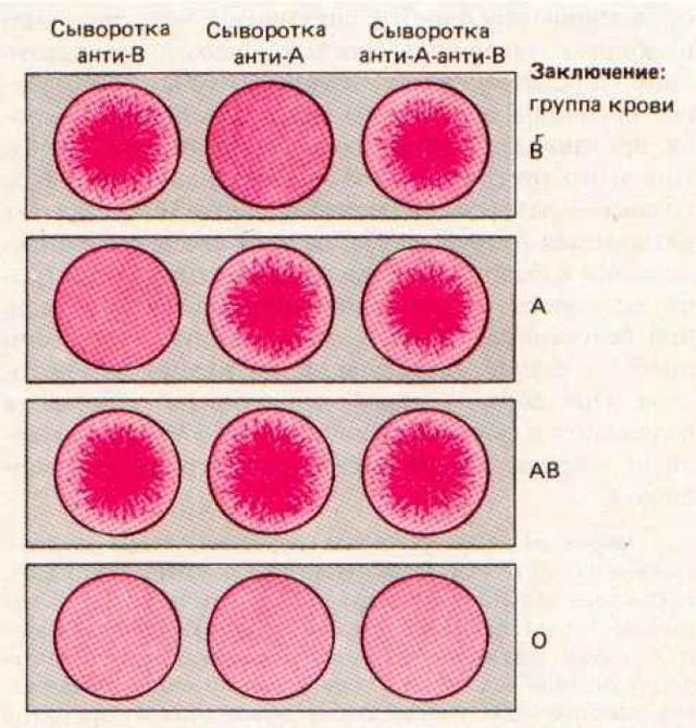 Сдать анализ на группу крови и резус фактор ребенку - узнать цены на услуги