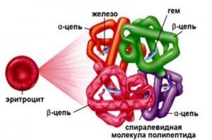 Низкий гемоглобин - что это значит, причины и последствия