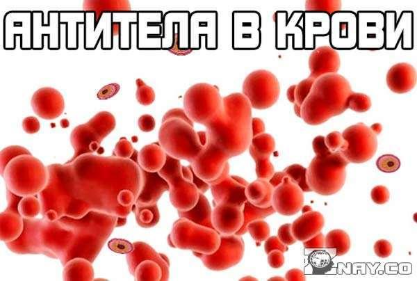 Анализ крови на антитела – выявление инфекционных заболеваний (корь, гепатит, хеликобактер, туберкулез, лямблии, трепонема и др.). Анализ крови на наличие резус-антител при беременности