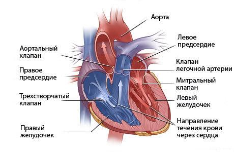 Ложная хорда левого желудочка - причины и лечение