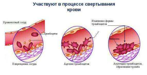 Повышенные тромбоциты в крови у женщин, мужчин: причины повышения, как снизить высокий уровень