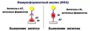 Чем отличаются антитела igg от igm