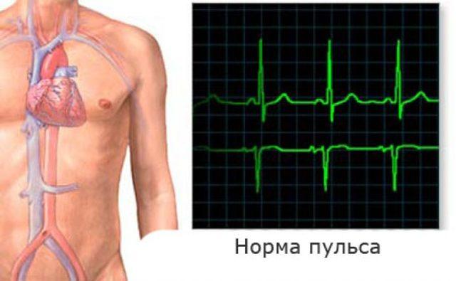 Нормальный пульс у взрослого человека