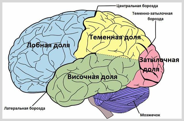 Кавернозная ангиома головного мозга