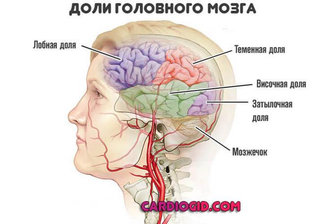 Атеросклероз сосудов головного мозга - лечение, симптомы