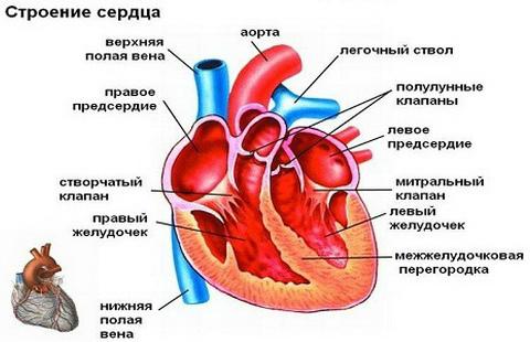 Анальгин при сердечной недостаточности -