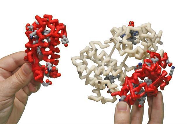 Гемоглобин у мужчин: норма в крови и что означает высокий и низкий уровень?
