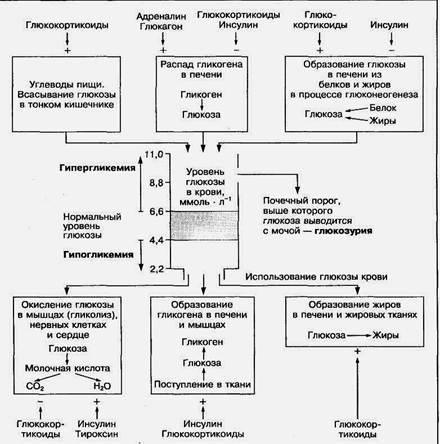 Анализ на глюкозу при беременности: особенности и важность