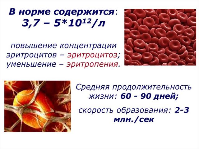 Причины, почему эритроциты понижены в анализе крови
